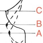 dessin morpho buste profil - copie
