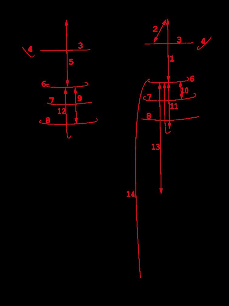 Exemple de mesures du corps humain